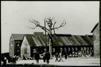 Photographie de l'arbre de Goethe avec des déportés se promenant | Crédits : © Association française Buchenwald-Dora et Kommandos