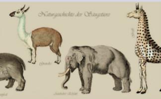 J. c. D. Schreber u.a.: Die Säugthiere in Abbildungen nach der Natur mit Beschreibungen, 1836. UB Erfurt, Dep. Erf. 13 - Nz. 4° 760 (7).