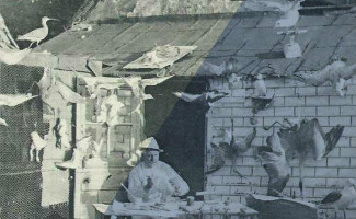 Les productions matérielles des amateurs et de leurs usages (1850-1950)